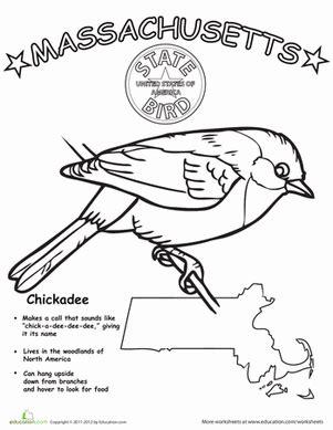 massachusetts state bird worksheet education