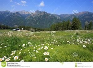 Wiese Mit Blumen : wiese mit blumen und berg im hintergrund stockfoto bild ~ Watch28wear.com Haus und Dekorationen