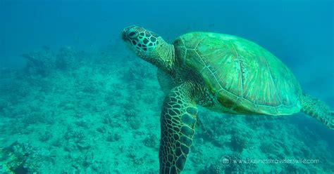 Catamaran Trips In Honolulu by Snorkeling With Hawaiian Green Sea Turtles And Sailing In