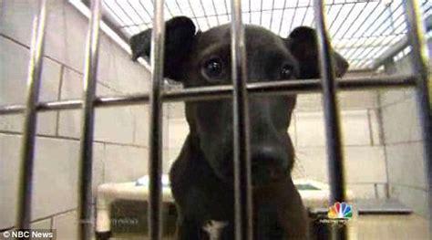 black dog syndrome  black dogs   homes