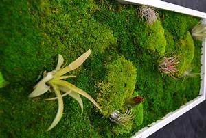 Lebendes Moos Kaufen : pflanzenbild moosbild mit lebenden pflanzen wandbild mit tillandsien wanddeko bilder wandbilder ~ Buech-reservation.com Haus und Dekorationen