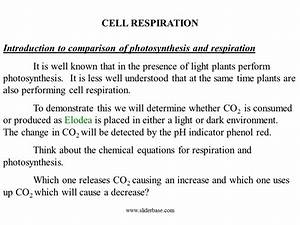 How Do The Chemical Equations For Photosynthesis And