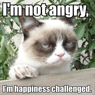 How To Make A Grumpy Cat Meme - 1000 images about grumpy cat on pinterest grumpy cat meme grumpy cat and memes