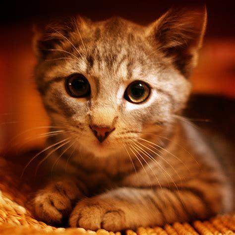 tips    cute pics   pet animals apn
