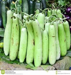 Indian Vegetable-bottle Gourd Stock Image - Image: 30303091