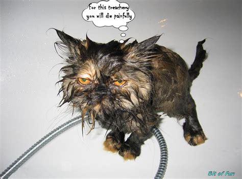 funny animal  page