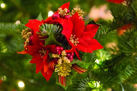 poinsettia christmas decoration free stock photo public domain pictures
