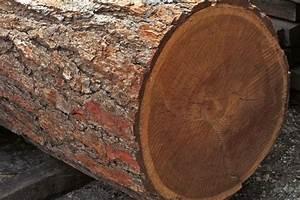 Unterschied Kiefer Fichte Holz : das holz der l rche eigenschaften und verwendung ~ Markanthonyermac.com Haus und Dekorationen
