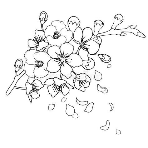 graphic sakura flowers stock vector illustration  black