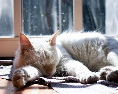 可爱软萌猫咪电脑桌面高清壁纸图片大全_可爱图片