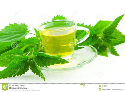 Herbal Tea From Stinging Nettle Leaf White Background