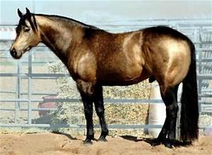 Cash's Steppin' Up: Finding the perfect horse.