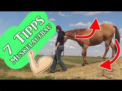 pferd balsam fuer die gelenke und muskeln des rueckens preis