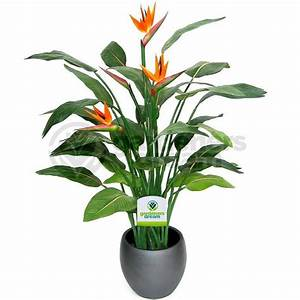 Strelitzia, -, 1, Plant, Office, Live, Indoor, Potted, Plant, Tree, In, 12cm, Pot, 5051641347646