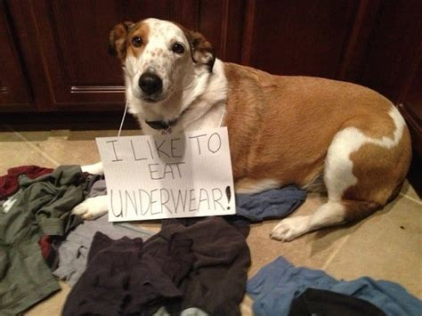 dog shaming      cracking