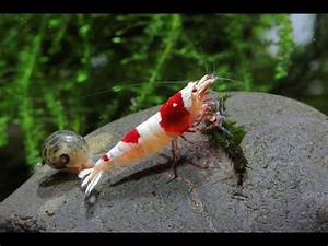 Welchen Dünger Für Aquarienpflanzen : aquarium 420 liter mit garnelen mollys platys guppy ~ Michelbontemps.com Haus und Dekorationen
