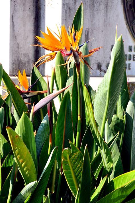 exotische pflanzen blumen blueten