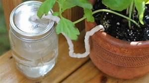 Goutte A Goutte Bouteille : l 39 astuce indispensable pour arroser vos plantes pendant votre absence ~ Dode.kayakingforconservation.com Idées de Décoration