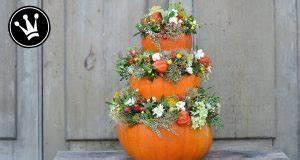 Walnussbaum Selber Pflanzen : videos auf ~ Michelbontemps.com Haus und Dekorationen
