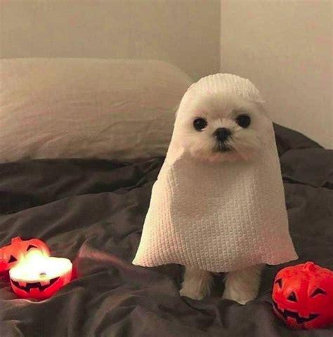 fotos de perros  disfraces terrorificos