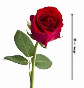 1 Rote Rose Bedeutung : jetzt 40 rote rosen bestellen ~ Whattoseeinmadrid.com Haus und Dekorationen
