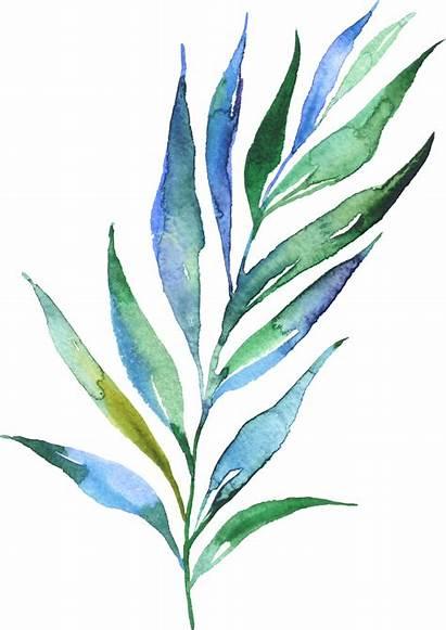 Watercolor Plants Leaves Watercolour Leaf Flowers Painting