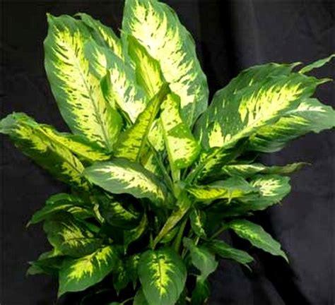 plantes verts d interieur plante verte d int 233 rieur d 233 polluante images