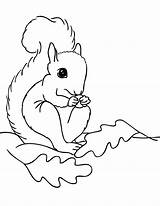 Squirrel Coloring Pages Preschool Printable Clipart Print Drawing Little Cliparts Animals Fall Line Clip Animal Library Books Visit Popular sketch template
