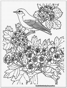Free coloring pages of pheasant