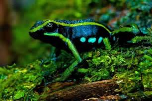 Peru Amazon Rainforest Animals