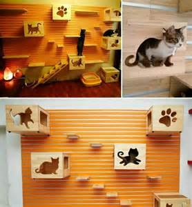 Cats Play Area