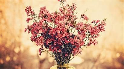 Flowers Bokeh Bouquets Desktop Wallpapers Backgrounds Background