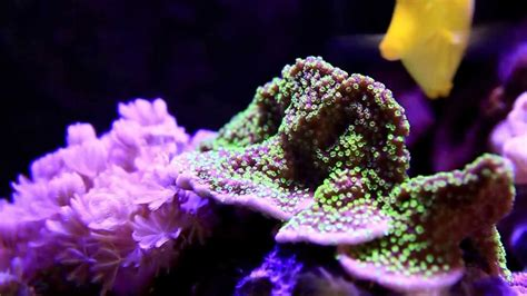 my reef aquarium 120 60 60 h cm 370 litres triangle sun tonight