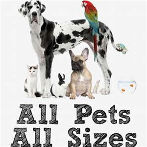 Pet sitters tulsa oklahoma find cat dog sitting jobs for Puppy dog sitter