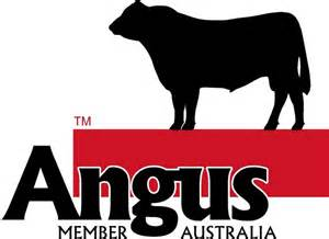 Angus Cattle Logo