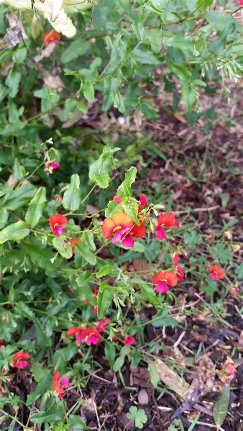 Karwarra Australian Native Plant Garden Melbourne