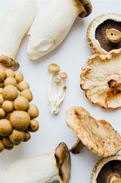 common types  mushrooms