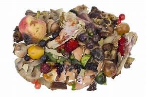 Image Gallery decomposing food