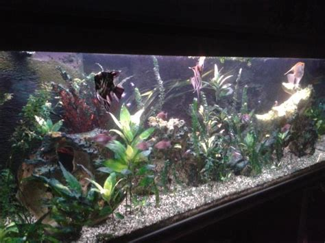 probl 232 me d algues filamenteuse brune forum aquarium