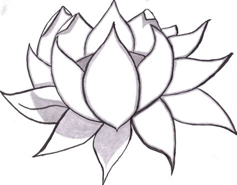 learn  draw flowers   kinds  simple daisies
