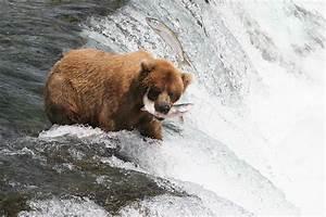 Alaska Sportsman U0026 39 S Lodge Wildlife Photos