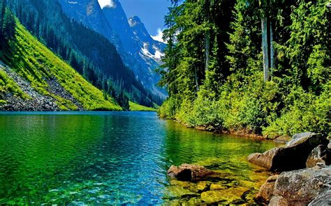 nature landscape clear mountain river stone pine forest