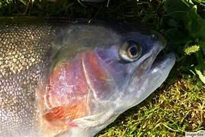Paypal Gebühr Berechnen : 4 st stonefly fliege 6 top bach regenbogen forelle saibling fliegenfischen ebay ~ Themetempest.com Abrechnung