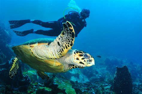 le de plongee sous marine residence batterie pour votre s 233 jour sur mesure en