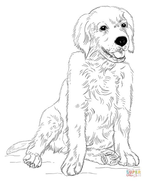 golden retriever puppy coloring page  printable