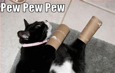 Pew Pew Pew Meme - caterville pew pew pew cats