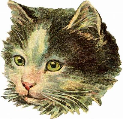 Cat Illustration Victorian Kitty Face Graphics Graphicsfairy