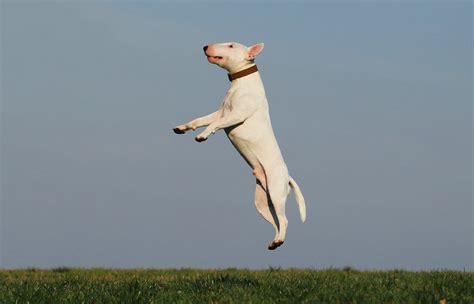 犬知恵|チワワ・マルチーズやシーズー等の犬の種類ごとの特徴や性格