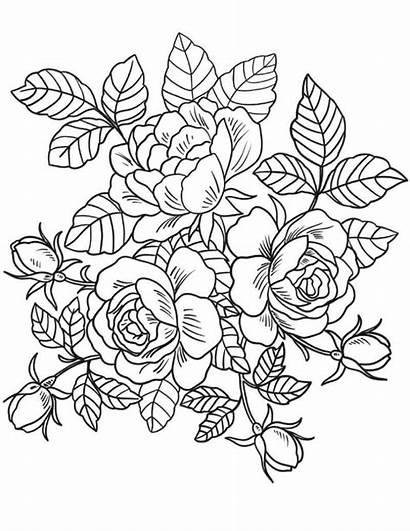 Colorir Flores Rosas Ramo Desenhos Desenho