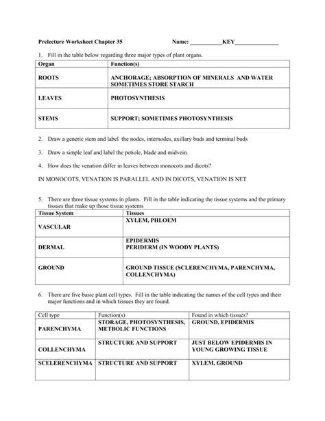 xylem  phloem gcse worksheet  printables worksheet